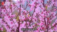 2018永嘉梅岙赏桃花