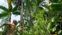 荒野求生: 德哥发现一颗长满果实的水果树, 体内的洪荒之力爆发了