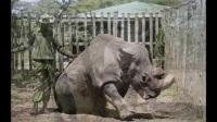 永别了 苏丹 永别了 那非洲广袤大地上曾经的男神——最后的雄性北非白犀牛 03192018