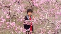 郊游马坝赏桃花