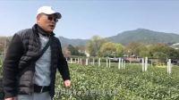 老倪说茶 第23期 西湖龙井茶纪实(上集)