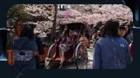 杨幂手拿日本扇穿和服,站在樱花树下玩摆拍,网友比白浅还美