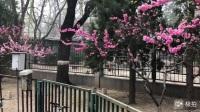 2018 年4 月2 日北京市朝阳区左家庄心连心合唱团之歌,小芹老师指挥的歌曲