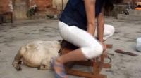 美女骑羊加q3601377478