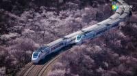 在中国,有这么一趟7块钱的网红列车,绝不输日本樱花海