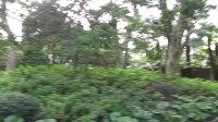 上海普陀区长风公园:公园内随拍喇叭里播着女高音的歌声,2018-03-31 下午