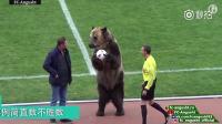 俄罗斯的熊应该是全世界地位最低的熊了吧,哈哈哈