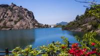 温州大罗山满山遍野杜鹃花