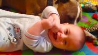 狗狗你们对着小宝宝亲个不停, 难道是小宝宝们身上有奶香味吗?
