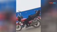 """【广西梧州市藤县:""""车神""""花式骑摩托秀车技,结果撞了!】"""