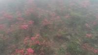 三省坡云雾缭绕映山红遍地