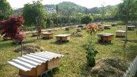 招收大量养蜂学徒,出售野生土蜂蜜,蜂群