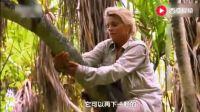荒野求生: 夫妻档探险妻子从树洞里揪出这个海鲜