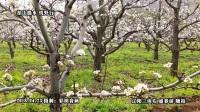 辽阳三块石 观花盛春游 2018.04.23 音画版