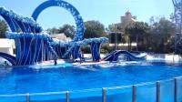 奥兰多海洋世界海豚表演 高速摄影 LG V20 + Zhiyun Smooth Q
