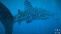 2018年4月图巴塔哈潜水之旅