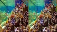 VR Videos 3D Aquarium VR Relaxation 3D VR 4K for Google Cardboard