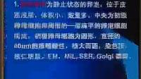 《人体组织学与胚胎学》第33讲-共42讲- 中国医科大学_标清