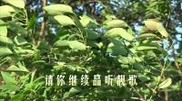 阳春东湖新面貌