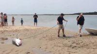 一只白鲨在沙滩上搁浅,还很凶!吓着游客了你猜后面发生了什么?