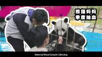 三位异国少年的7日神奇熊猫之旅