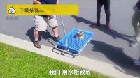 小鸟撞上超市玻璃身亡,员工举办葬礼:它只想吃鸟食,但失去了生命