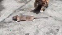 猫咪你摊上事了 你摊上大事了