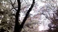 武汉大学樱花节 人正多,花正盛20100321  拍摄:csscgz