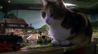 闯入火车模型沙盘的喵星人