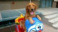狗狗坐摇摇车,超可爱,超搞笑!