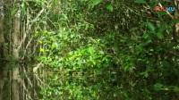 6热带雨林