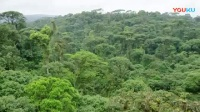 8.1热带雨林