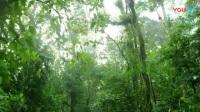 8.4热带雨林