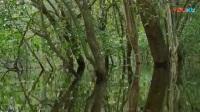 10热带雨林