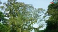 11热带雨林