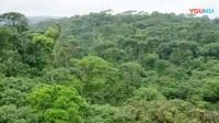 13热带雨林