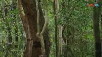 26热带雨林