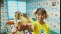 卓依婷 - 01 - 鸭子【DVD高清版】