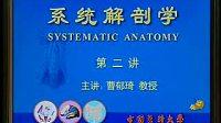 系统解剖学02