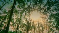 泰国歌曲เทพีบ้านไพร-กุ้ง_สุธิราช