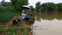 临朐钓鱼帮-2018年6月27日温泉湖手杆钓鱼视频。