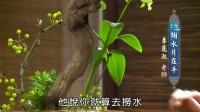 中华花艺:茶席【掬水月在手】