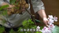 中华花艺:茶席【道人椅仗看云归】