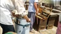 蜂农夫妻两靠160箱蜜蜂,走南闯北养活了一家人!心酸!
