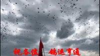 云南大理九鼎赛鸽中心8月17日家飞视频