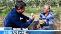 """首个""""中国农民丰收节""""来临有何深意?黄土高坡上的""""种梨宝典"""" 180923"""