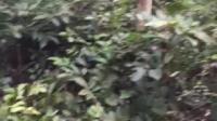 风水宝地13237798169寻龙点穴,广东留题风水宝地马踏地