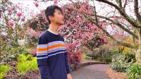 奥克兰植物园, 观赏樱花的好地方