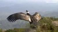 被救助🦅鹰