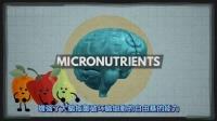 不同的食物是怎么影响大脑表现的呢